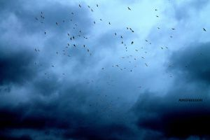 Dark Sky with birds by minefreedom