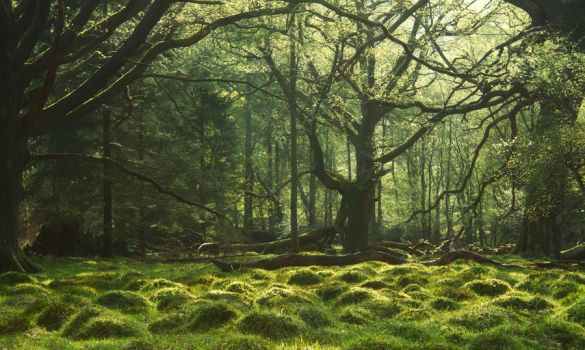 Mirkwood by scotto