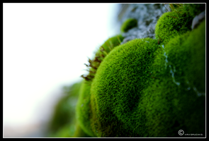The Moss. all in Green. by Lapapunk