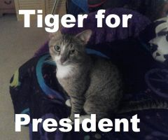 Tiger for President by Zacaria-Lain