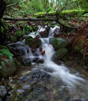 Small Creek by cjosborn