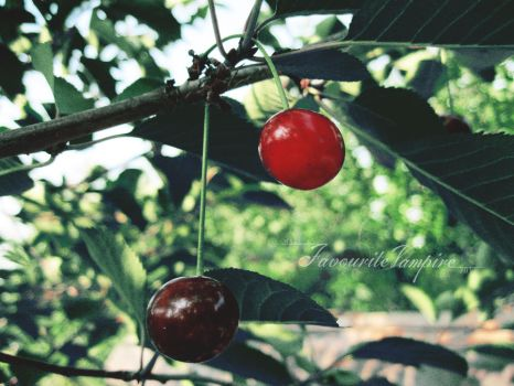 July.Sweet cherry.06 by favouritevampire