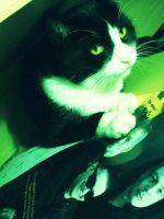 My cat loves Placebo by floratatouille