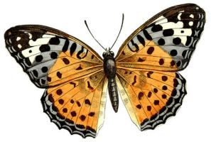 Huge Butterfly Clipart by HauntingVisionsStock