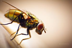 Blow Fly by PhotoshopAddict89
