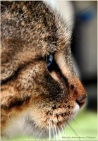 fascination of cats eyes by brijome