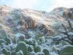 Tucson Mountain Snow with Prickly Pear Cactus by cereus-cactus