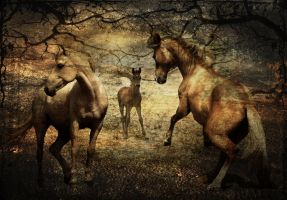 Horse Family by Fotomonta