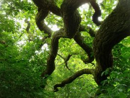 branches of oak 4 by Estruda