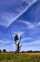 Tree Pulls the Heavens Open by Photophore