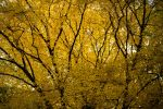 Autumn Branches by Thrym982