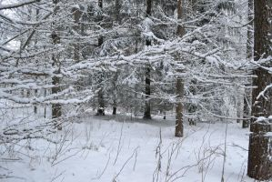 Wintery forest 6 unrestricted photo stock by MariaLoikkii