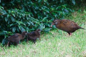 Weka family by Mikelyjohnsono
