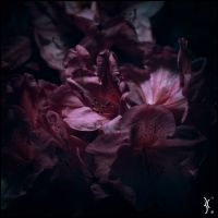 Flower in the Dark by KantX-Photography
