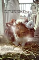 Togepig the Guineayak (Guild Wars 2). by trishajessica