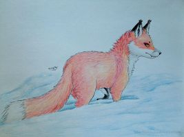 Snow Fox by brittany4231