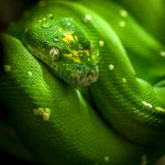Green Tree Python by v4nity