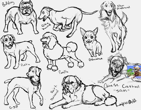 Sketchdump Breeds - Free to use by Kayxer