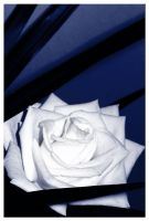 Blue Rose by jensequel