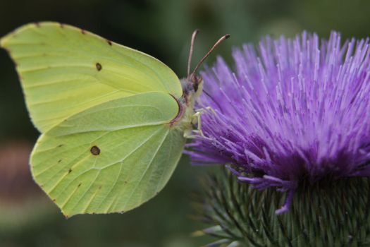 Butterfly by Milesja