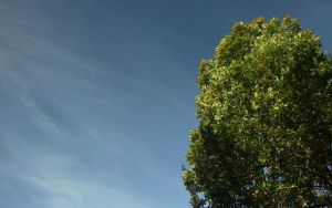 A tree with the skies by aktron