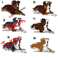 APBT point adoptables 1 by BoricuaFreak