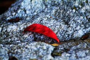 Autumn Leaf by meeks105