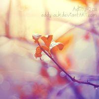 ..Blossom.. by addy-ack
