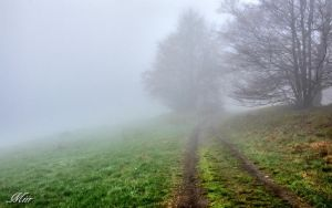 Road to the mist by miirex
