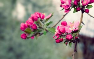 Beauty Of Nature by Sinine88