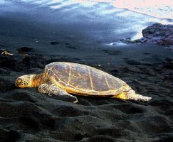 Sea Turtle by PlayWithMyHeart