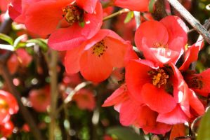 Red Flowers by OwlCityHootOwl