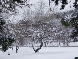 Branch Brook Park Winter by jswis