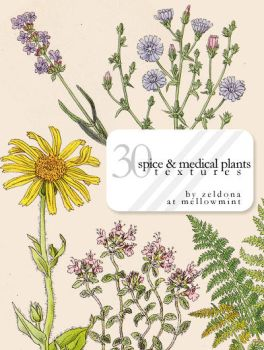 spice and medical plants by mellowmint