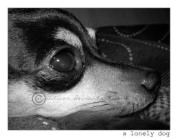 A Lonely Dog by manticor
