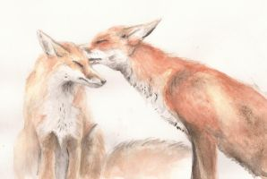 Foxes by x-hearts-under-fire