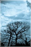 The Blood Tree by Pinkatron2000