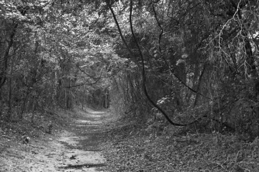 Path of Doom by LeftyRodriguez