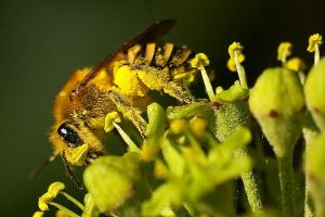 a loaded bee by wxphoto
