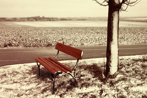 The Bench I Nearly Died For - Winter by lsalsa