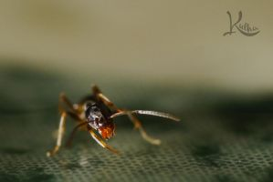 Charging Ant by AbstractedRealism