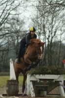 Chestnut Pony - Eventing stock 5.14 by MagicLecktra