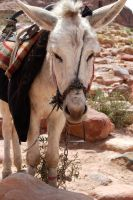 Bedouin Ferrari by theDeathspell
