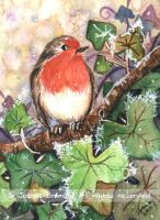 ACEO Robin and Winter Ivy by JoannaBromley