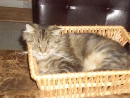 Basket Kitty by JenniBee