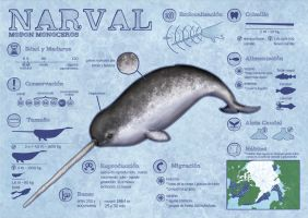 Narwhals infographics by Alba-R-Luque