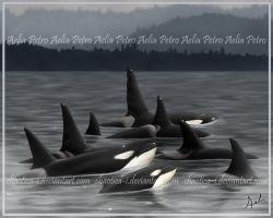 Orca Awareness Month by Chaotica-I