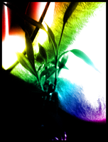 Rainbow Bamboo by Philosophical-Art