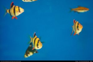 Fish Stock 0005 by phantompanther-stock