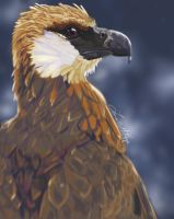 Madagascar Fish Eagle by revois